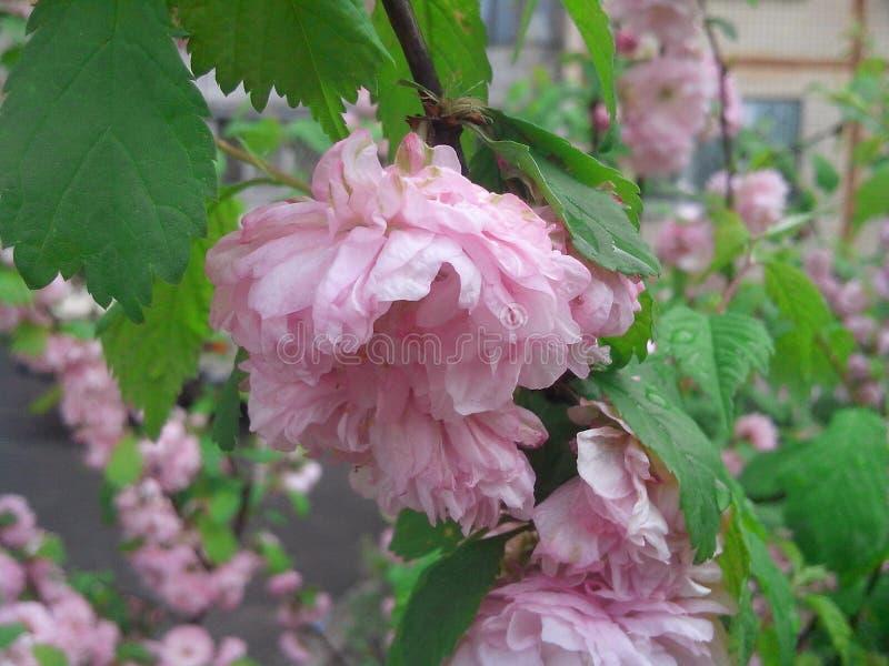 Fleur de NIC image stock