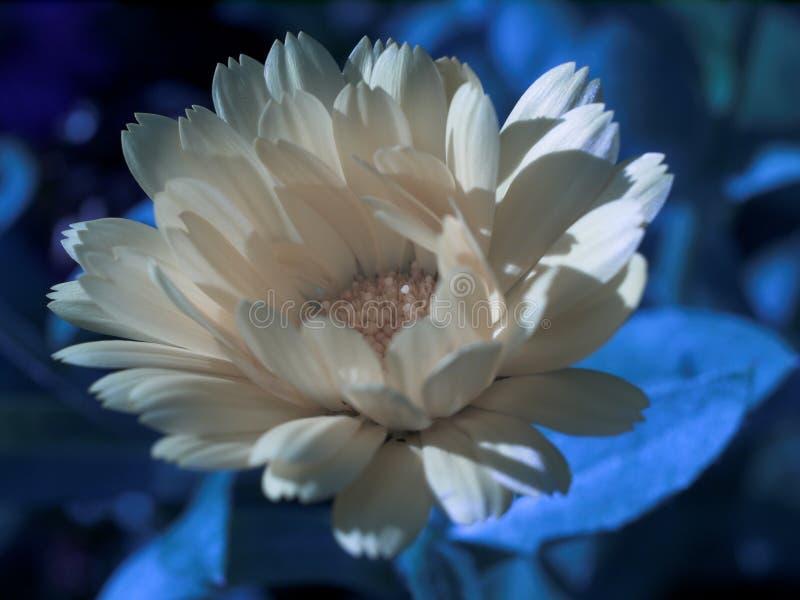 Fleur de nuit images libres de droits