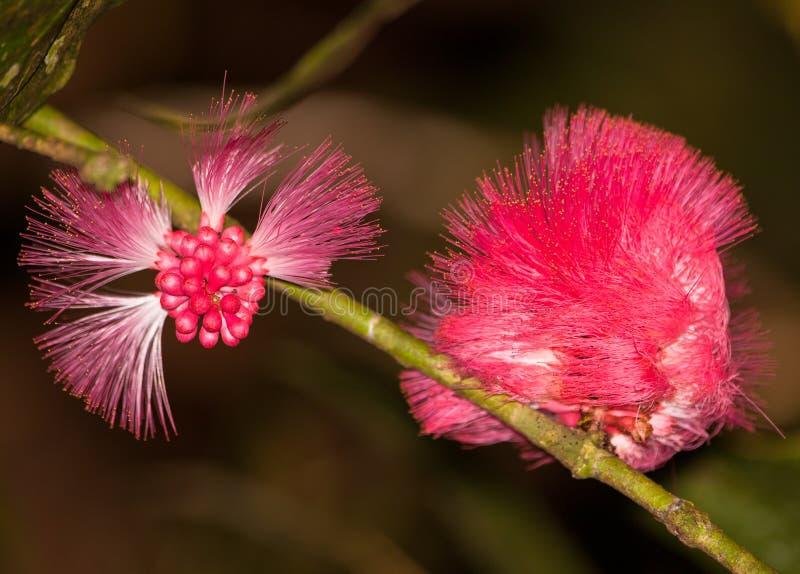 Fleur de nuit tropicale images libres de droits