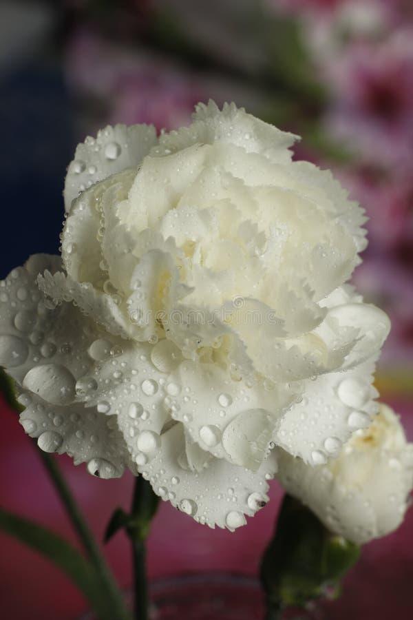 Fleur 51 de passion image stock