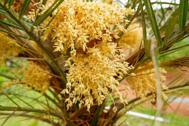 Fleur de paume photo libre de droits