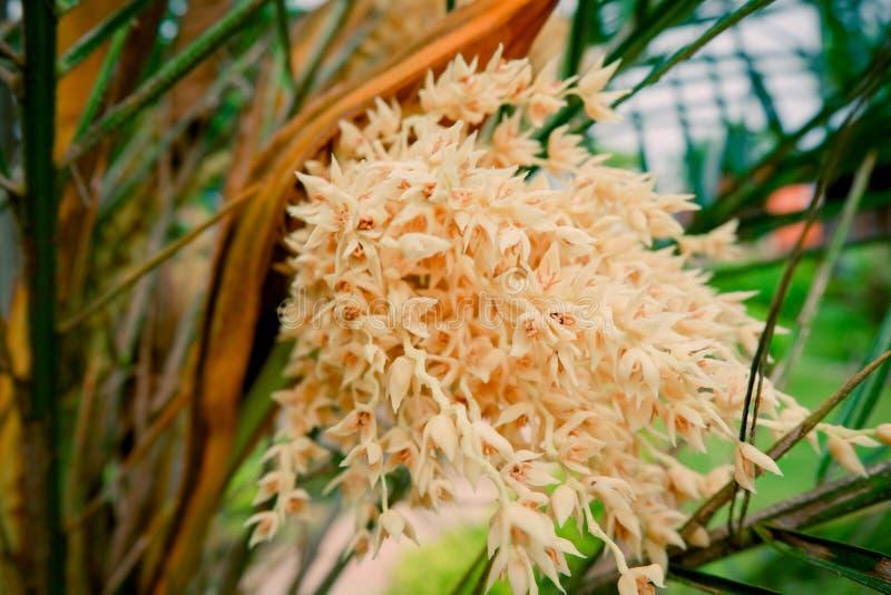 Fleur de paume photo stock