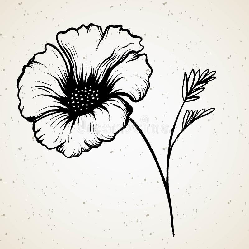 Fleur de pavot Beau dessin, dessin dessin? ? la main pavot d'isolement sur le fond de cru illustration stock