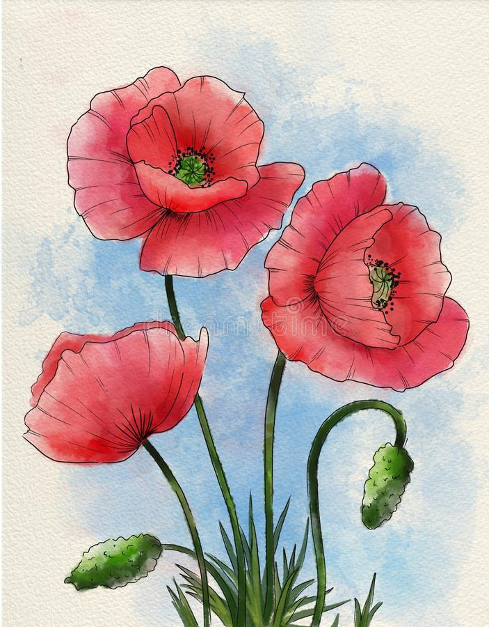 Fleur de pavot d'aquarelle illustration stock