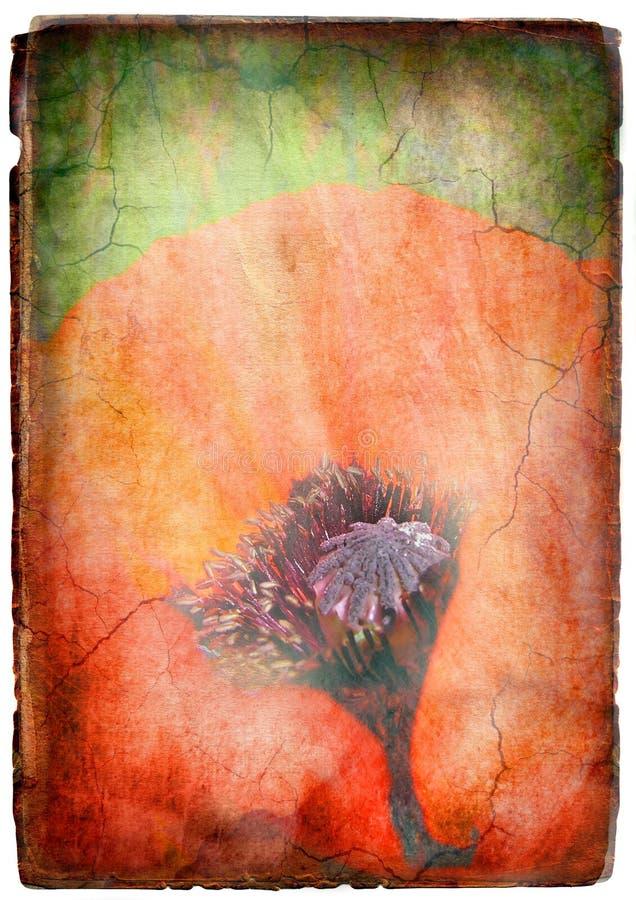 Fleur de pavot de cru illustration de vecteur