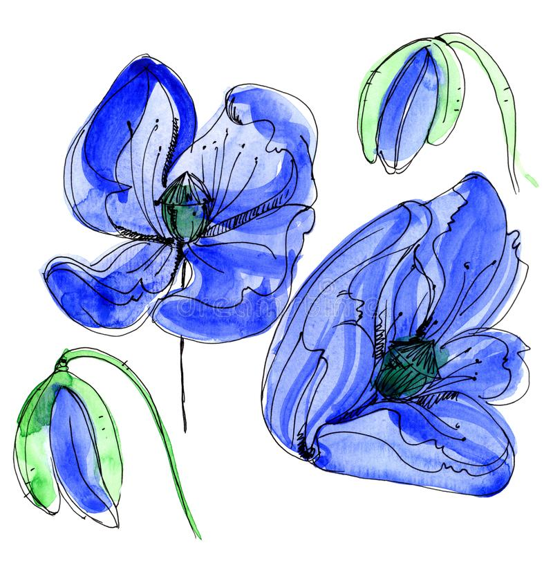 Fleur de pavot de Wildflower dans un style d'aquarelle d'isolement illustration de vecteur