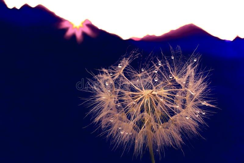 Fleur de pissenlit avec des baisses de l'eau sur un fond de terrain montagneux images stock