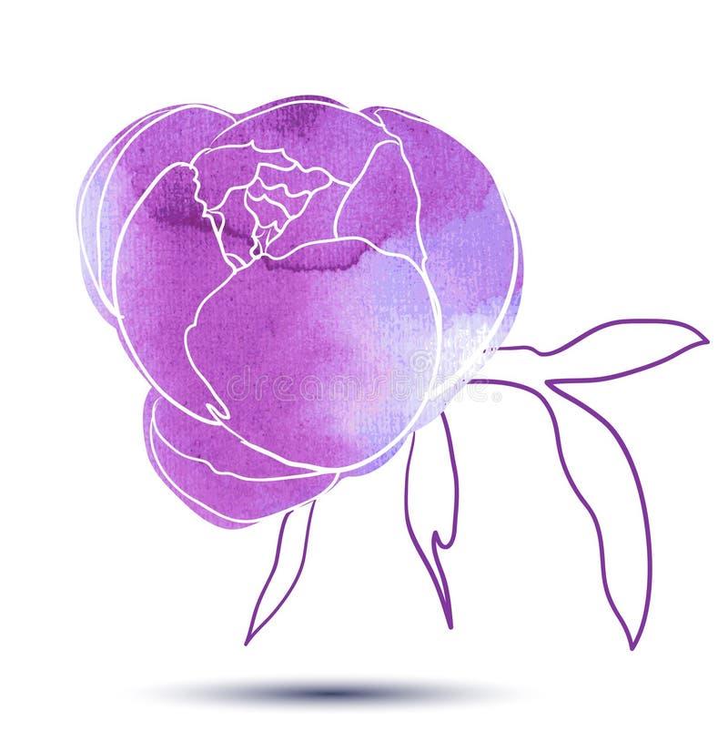 Fleur de pivoine illustration libre de droits