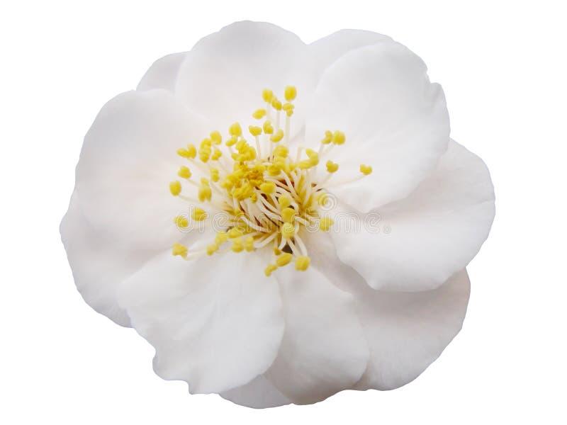 Fleur de plomb photos libres de droits