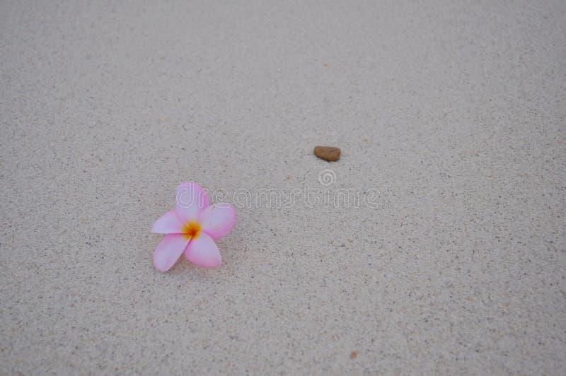 Fleur de Plumeria sur la plage photographie stock