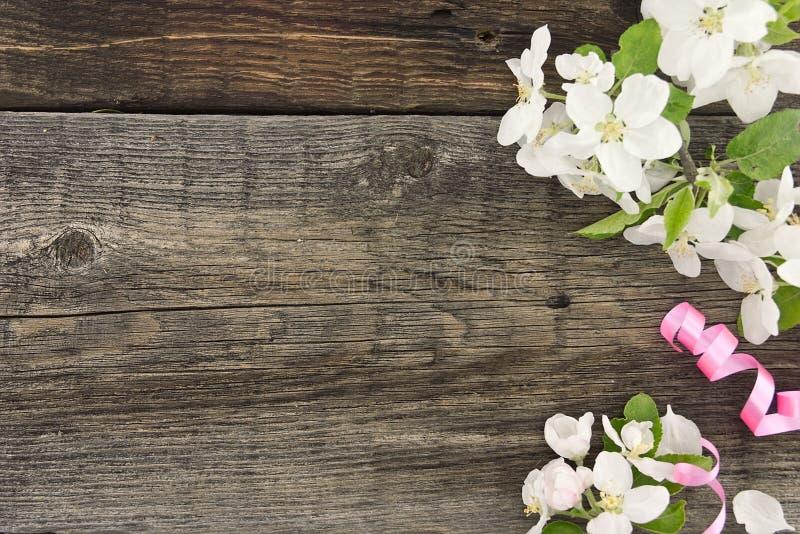 Fleur de pommier de ressort sur le fond en bois rustique avec l'espace photo stock