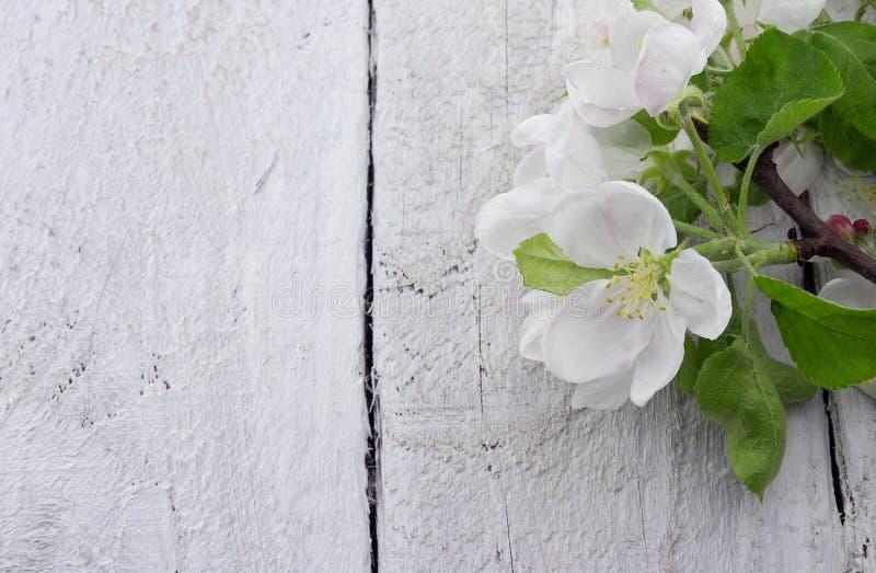 Fleur de pommier de ressort sur le fond en bois rustique avec l'espace images libres de droits