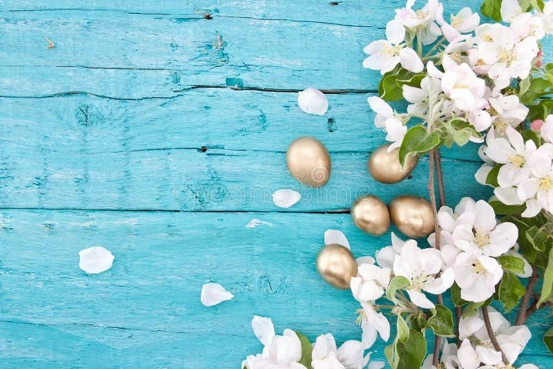 Fleur de pommier de ressort sur le fond en bois rustique de turquoise photos libres de droits