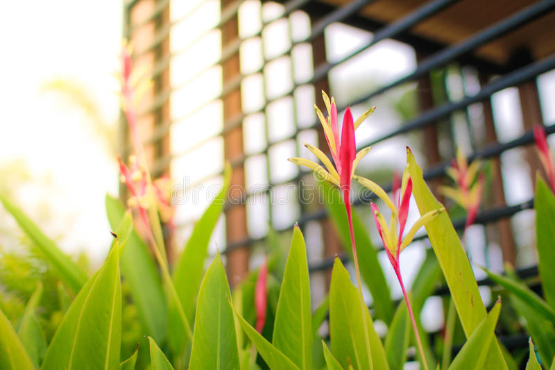 Fleur de prairie photographie stock libre de droits