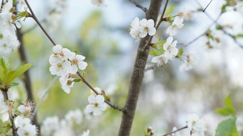 Fleur de printemps photo stock