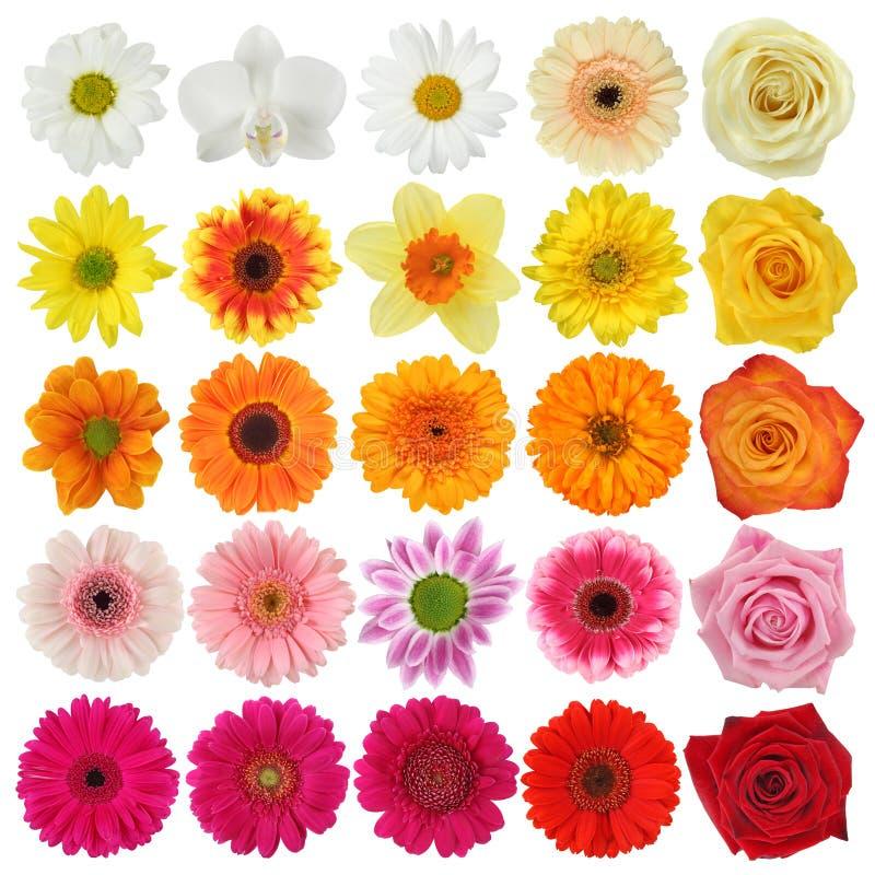 fleur de ramassage images stock