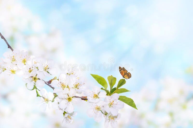 Fleur de ressort avec le papillon images stock