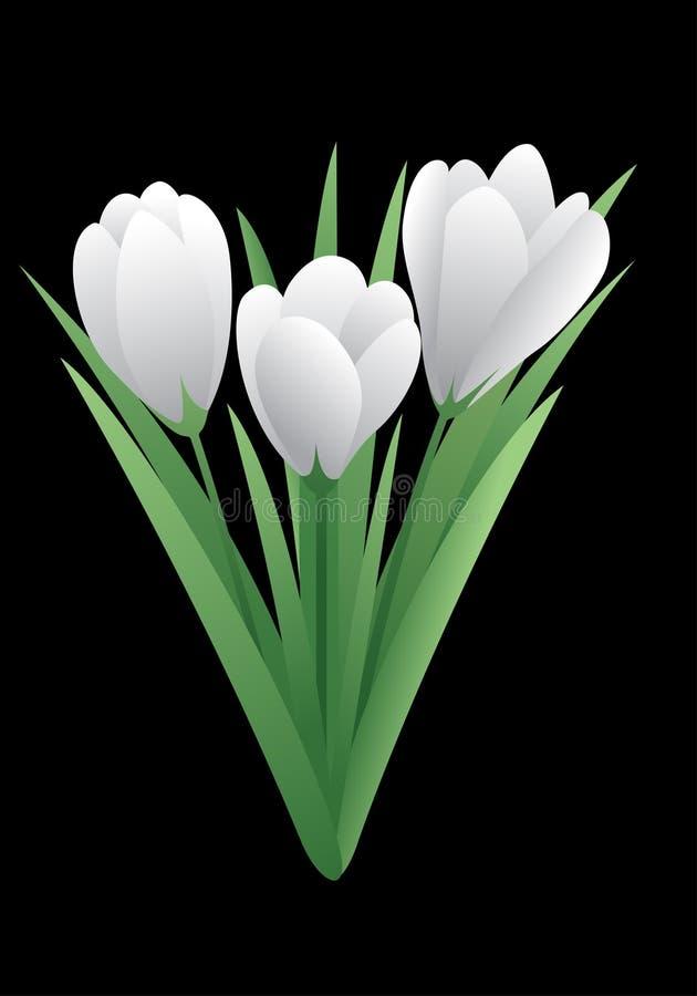 Fleur de ressort - crocus photographie stock