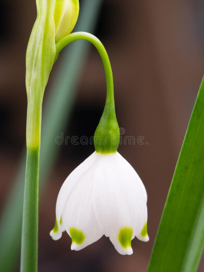 Fleur de ressort de flocon de neige photo stock