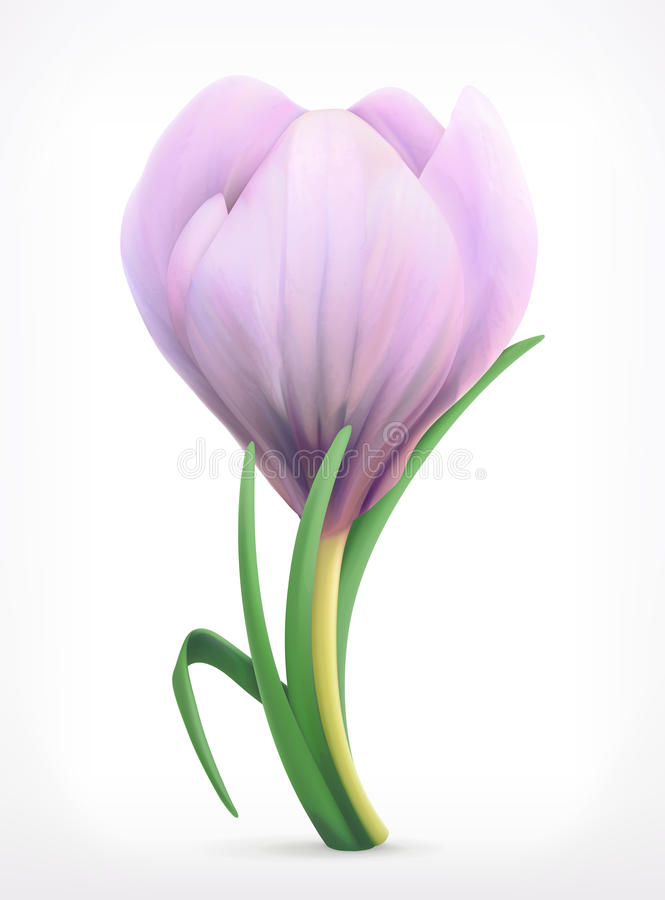 Fleur de ressort de perce-neige illustration stock