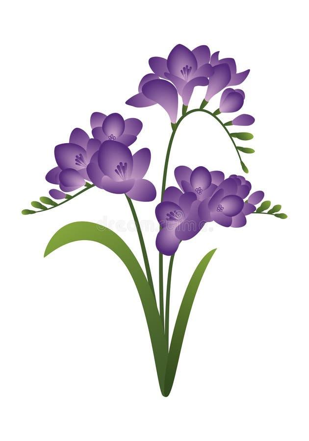 Fleur de ressort - freesia image libre de droits