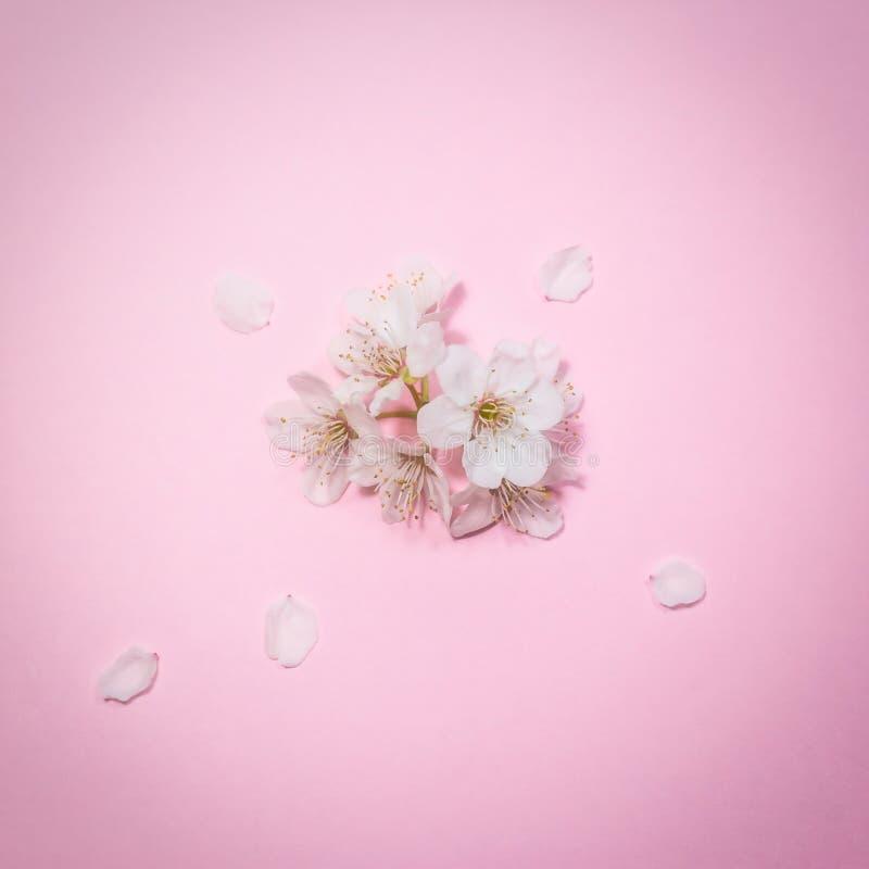Fleur de ressort sur le fond rose photos libres de droits