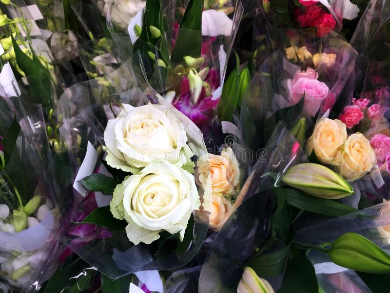 Fleur de Rose à vendre photo libre de droits