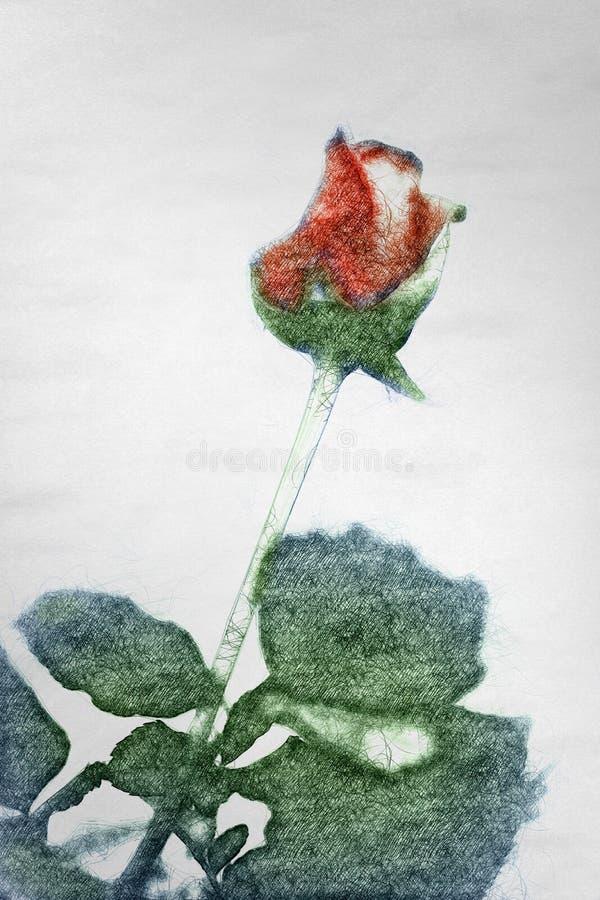 Fleur de Rose dans le style tiré par la main sur la texture de papier illustration stock