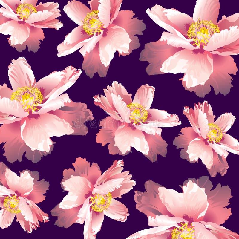 Fleur de rose de pivoine de suffruticosa de Paeonia illustration de vecteur