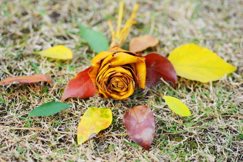 Fleur de Rose faite de feuilles colorées en automne photographie stock libre de droits