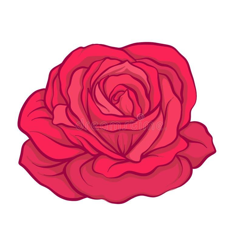 Fleur de rose de rouge d'isolement tirée par la main Ligne courante illustrat de vecteur illustration de vecteur