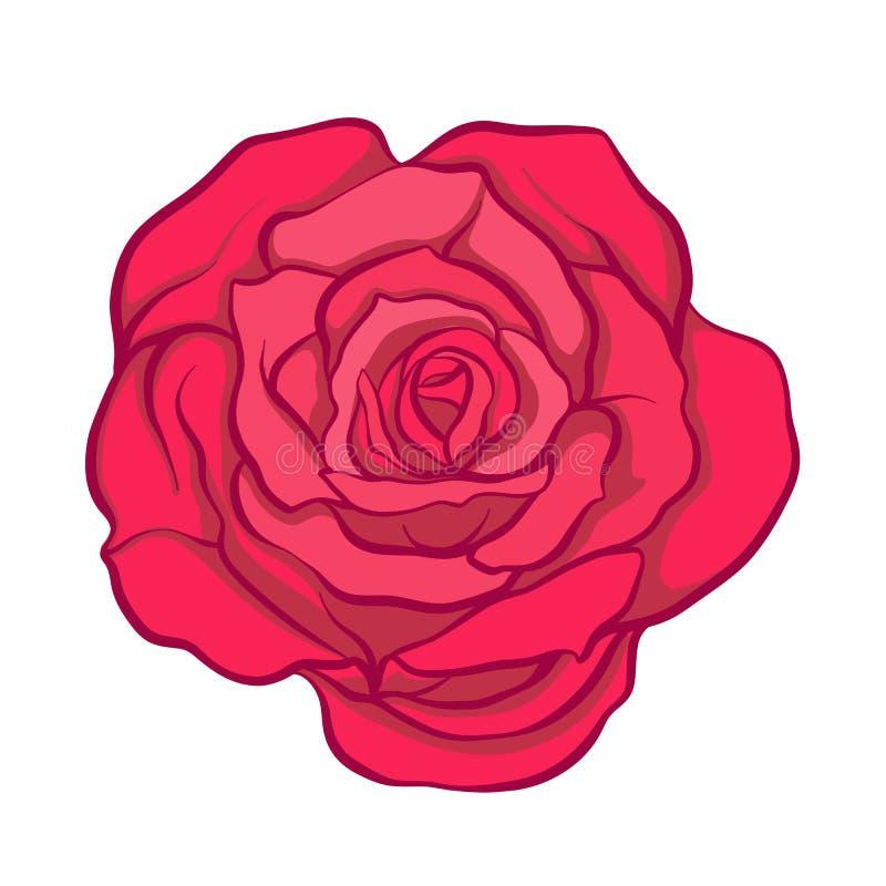 Fleur de rose de rouge d'isolement tirée par la main Ligne courante illustrat de vecteur illustration libre de droits