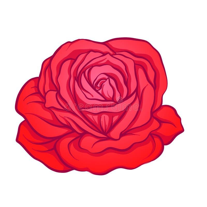 Fleur de rose de rouge tirée par la main Ligne courante illustrat de vecteur illustration de vecteur