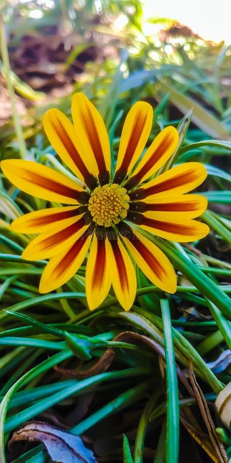 Fleur de rue photographie stock libre de droits