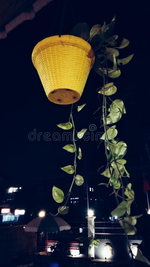 Fleur de rue images libres de droits
