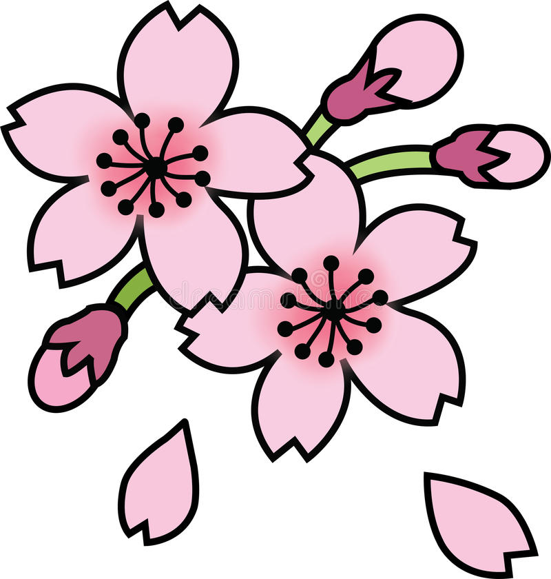 Fleur de Sakura de fleurs de cerisier photos stock