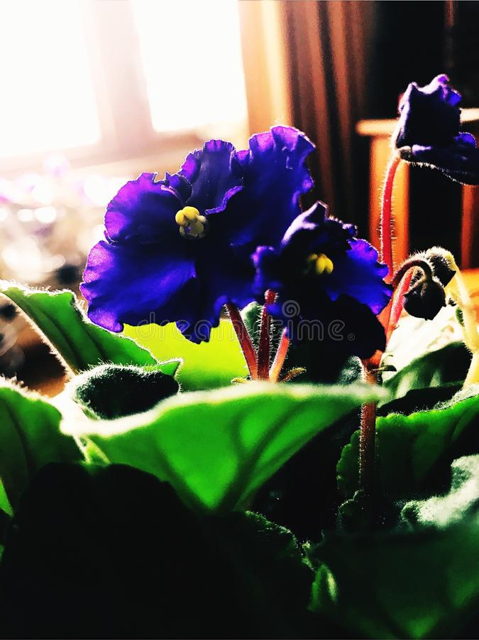 Fleur de salon image stock