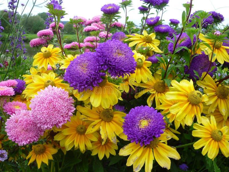 Fleur de Serie photo stock
