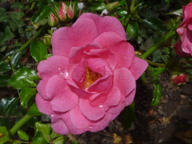 Fleur de Serie photographie stock libre de droits
