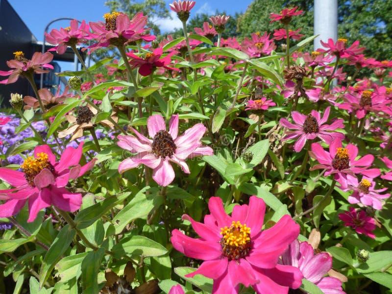 Fleur de Serie images stock