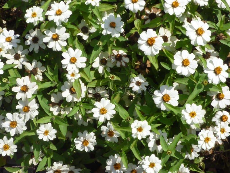 Fleur de Serie photographie stock