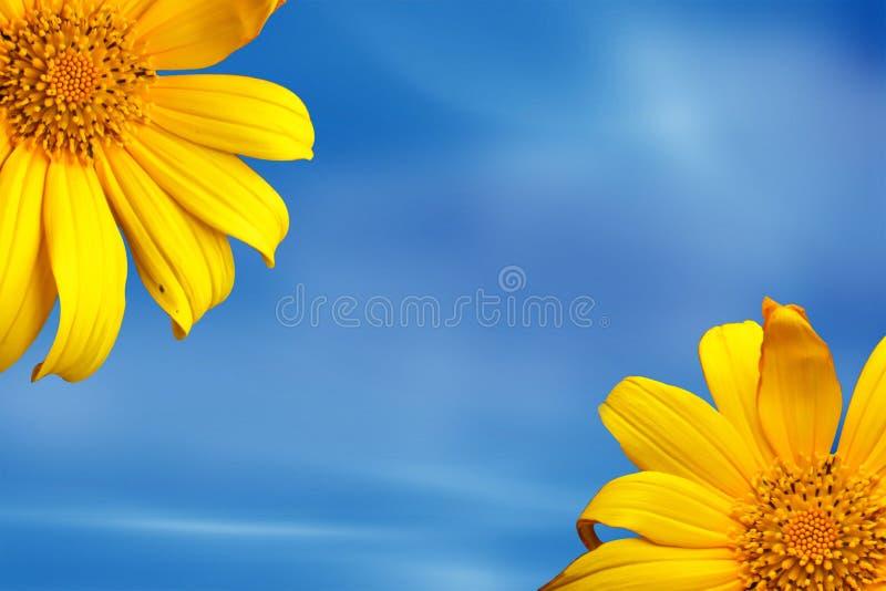 Fleur de soleil photos stock
