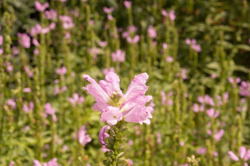Fleur de Sorrounded qui seul se sent photos stock