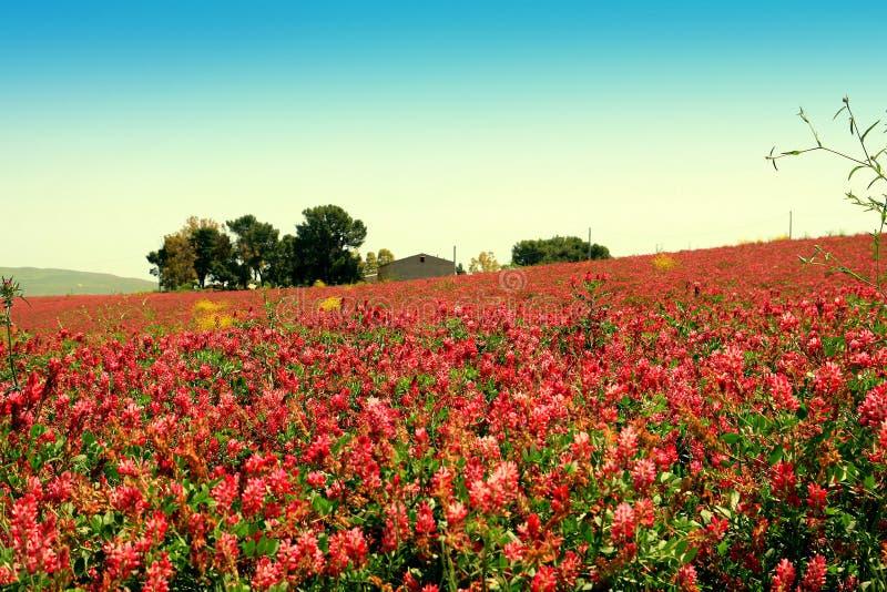 Fleur de source, horizontal coloré de prairie. La Sicile image libre de droits