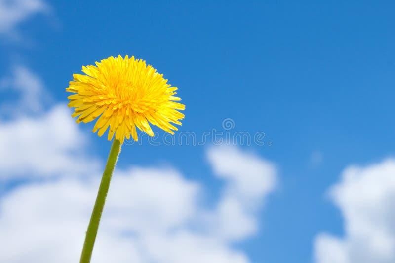 Fleur de source sur le ciel bleu images libres de droits