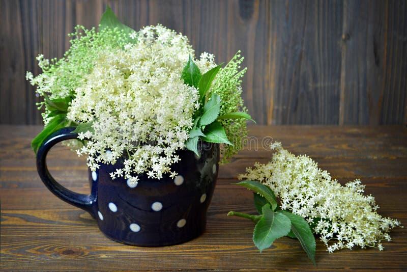 Fleur de sureau fraîche photographie stock libre de droits