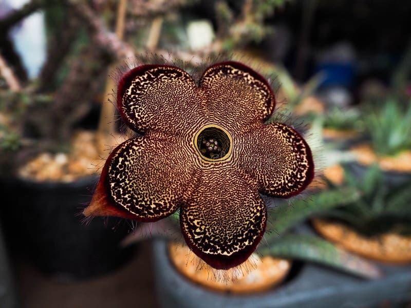 Fleur de tapis de Perse image libre de droits