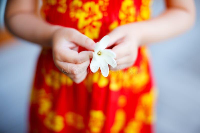Fleur de Tiare photographie stock