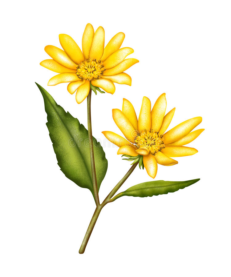 Fleur de topinambour images stock