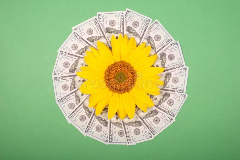 Fleur de tournesol sur le kal?idoscope de mandala de l'argent Cercle abstrait de mandala de r?p?tition de mod?le de trame de fond photographie stock libre de droits